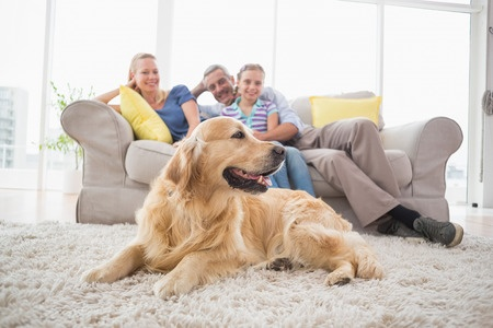 Tips for making your home more pet-friendly