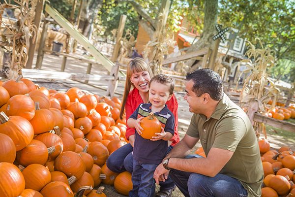 Don't miss out on this seasons pumpkin patches around Denver.