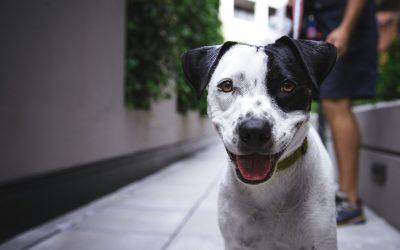 Dog-Friendly Denver